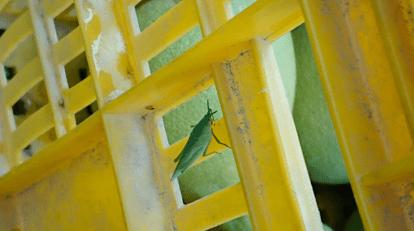 農場手札 - 記錄著生物的多樣性,安心又友善的環境